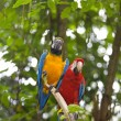 Wild Macaw — Stock Photo