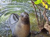 Sea lion portrait — Стоковое фото