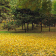 Golden carpet of ginkgo leaves — Stock Photo #8030147