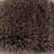 Raccoon fur — Stock Photo