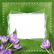 Vintage background for invitation and photo. Velvet. — Stockfoto
