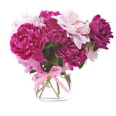 Bouquet of peonies blooms — Stock Photo