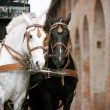 Horses in carriage - Stock Photo