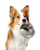 Cão com tigela — Foto Stock