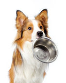 Dog with bowl — Stock Photo