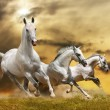 White horses — Stock Photo #9045750