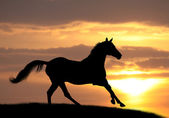 Horse in sunset — Stock Photo