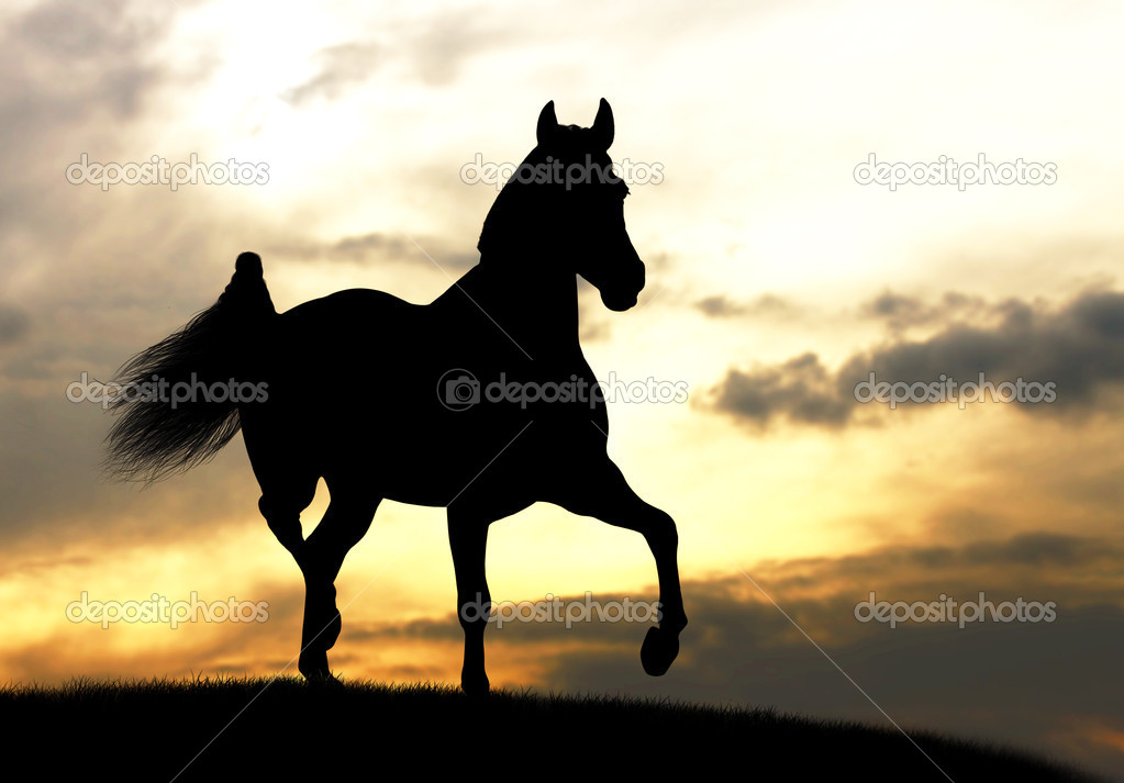 Horse silhouette in a sunset — Stock Photo #9045803