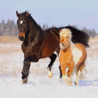 Horses playing in snow — Stock Photo #9787047