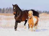 Horses playing in snow — Stock Photo