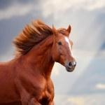 Chestnut horse — Stock Photo #9835546