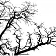 Royalty-Free Stock Vector Image: Tree branches silhouette