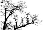 Tree branches silhouette — 图库矢量图片