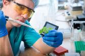 Laboratory test — Stock Photo