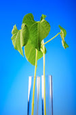 Plant in test tube — Stock Photo