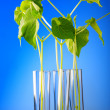 Plant in test tube -  