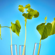 Stock Photo: Plant in test tube