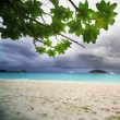 Tropical rain - Stock Photo