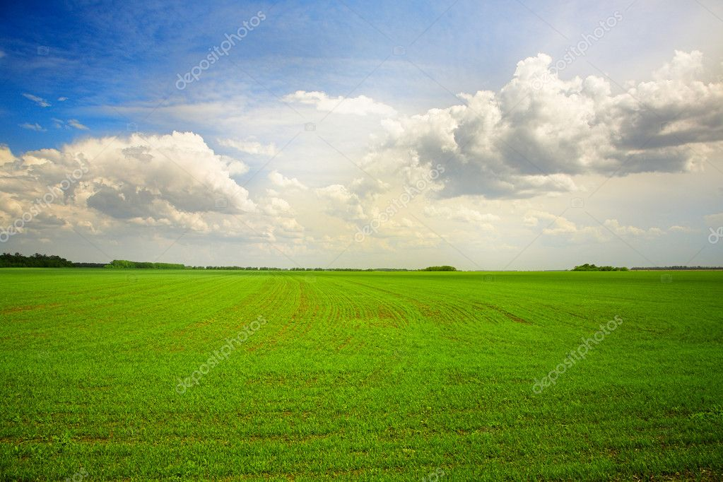 Green agricultural field under cloudy blue sky — Stock Photo #9621472