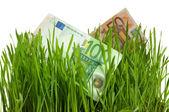 Euros en la hierba aislado — Foto de Stock