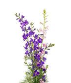 Bukiet kwiatów dziko na białym tle — Zdjęcie stockowe
