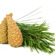 Foto Stock: Branch with pine cone