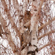 Owl on a tree — Stock Photo #8625260