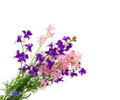 Bouquet of wild flowers isolated — Stock Photo