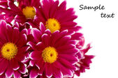 Summer flowers background isolated — Stock Photo
