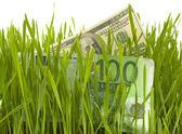 Währung in das grüne gras, isoliert — Stockfoto