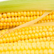Cobs corn — Foto Stock