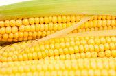 Cobs corn — Stock Photo