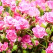Small pink flowers — Stockfoto
