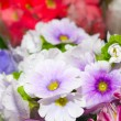 Background of flowers — Stockfoto