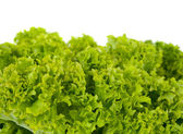 Salad leaves isolated — Stock Photo
