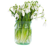 Snowdrops in vase isolated — Stock Photo