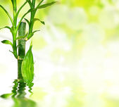 Bamboo leaves reflected in water — Stock Photo