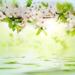 White spring flowers on a tree branch — Stock Photo