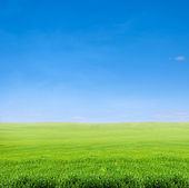 Field of green grass over blue sky — Stock Photo