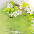 Spring flowers on water waves — Stock Photo