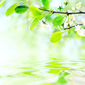 White spring flowers on branch on water waves — Stok fotoğraf
