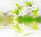 Spring flowers on branch on water waves — Stockfoto