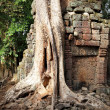 Ancient ruins of the Angkor — Stock Photo