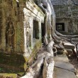 Ta Prohm temple - Stock Photo