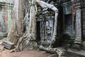 Ancient ruins and roots — Stock Photo