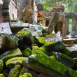 Ancient ruins of Ta Prohm - Stok fotoğraf