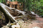 Ancient ruins of Ta Prohm — Stock Photo