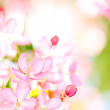 Sakura flowers blooming — Stock Photo #10238633