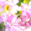 sakura flowers blooming — Stock Photo #10344636
