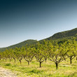Cultivation of fruit trees - Stockfoto